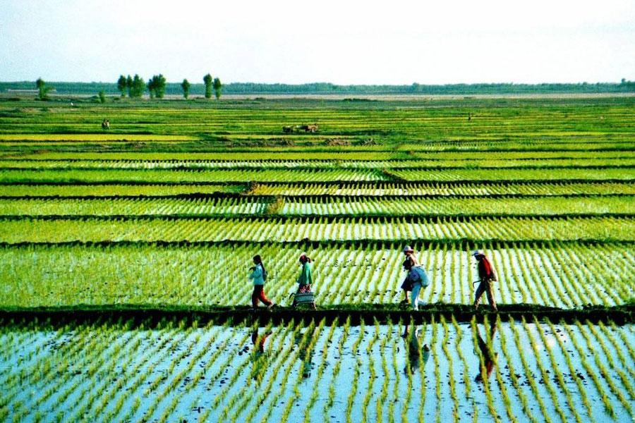 穹拓上海网站制作公司为农业企业网站制作需要多少钱